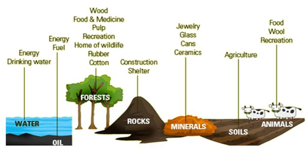 Natural Resources worksheet for class 5 | myCBSEguide | CBSE Papers ...