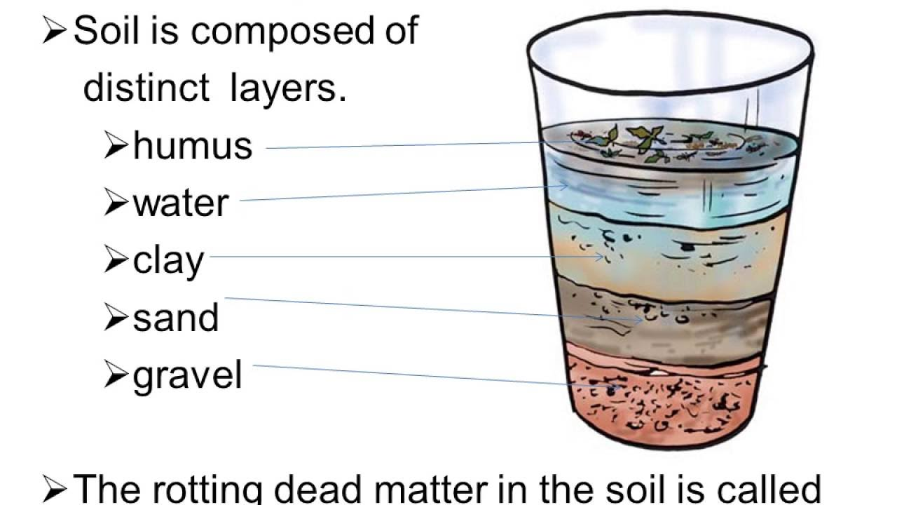 worksheet Soil Layers Worksheet soil worksheet for class 7 mycbseguide com 7