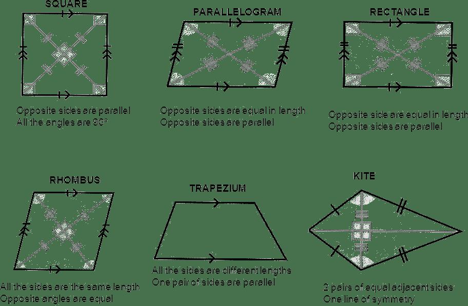 Understanding Elementary Shapes Worksheet For Class 6 Mycbseguide